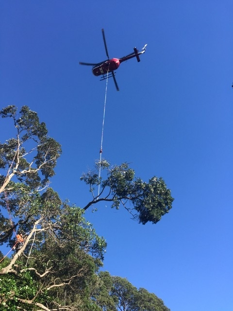 bo105 helicopter tree felling