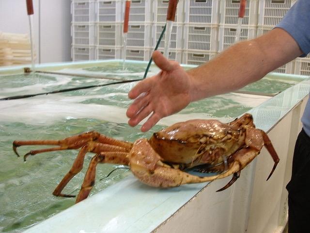 Marine Biosecurity